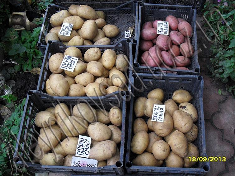 29 мар 2016. Обзор и описание лучших сортов картофеля, их характеристики и фото.